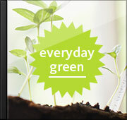 everyday green (그린송)